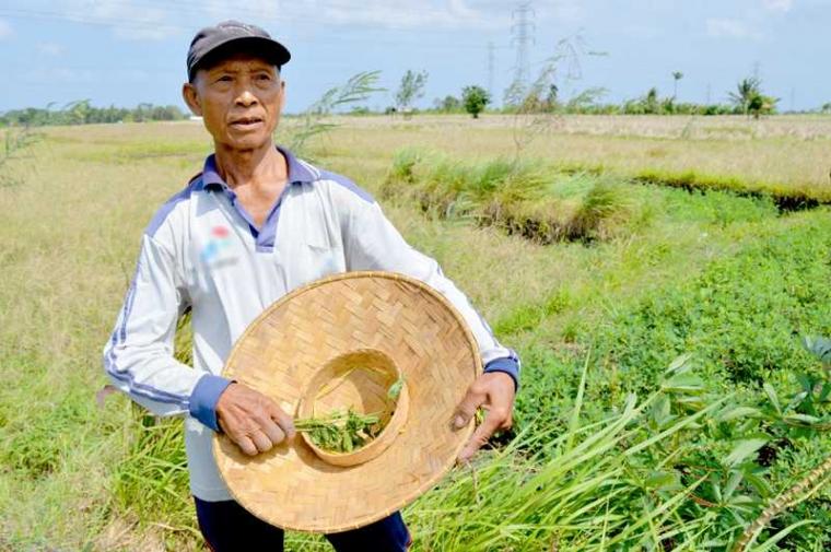 Made Jani, Petani Andal dengan Segudang Pengalaman