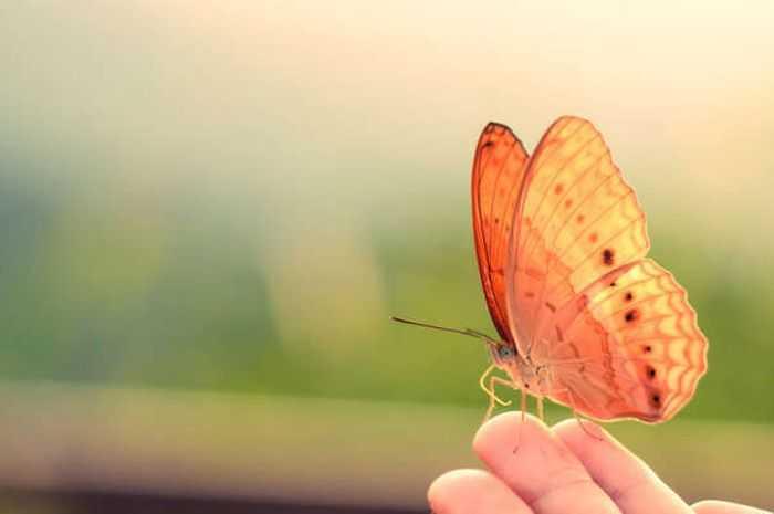 Puisi │Seperti Perburuan Waktu terhadap Kupu-kupu