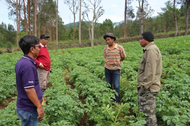 Pupuk Kompos pada Kentang Tingkatkan Taraf Hidup Masyarakat Babangeng