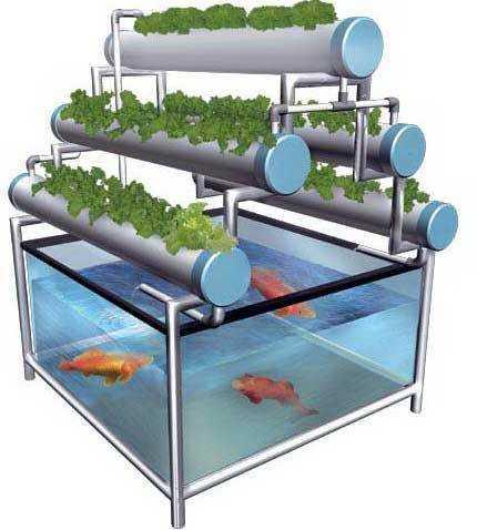 """""""Aquaponic for Urban Farming"""", Strategi Pemberdayaan Komunitas dengan Akuaponik"""