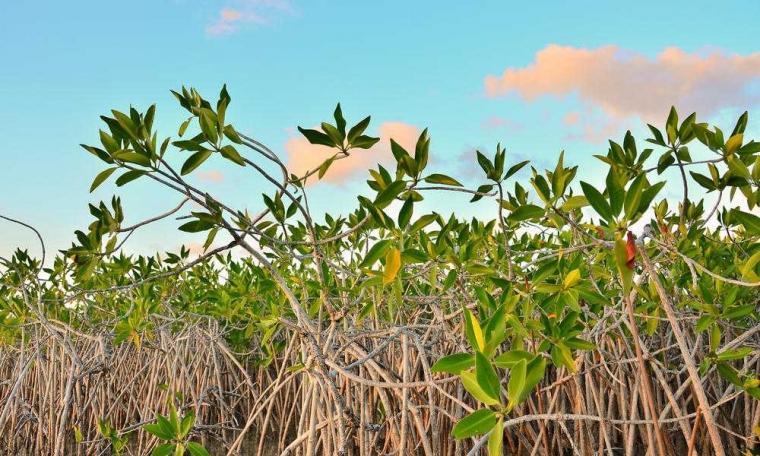 [Event Komunitas] Kurang Piknik? Ikut Click Jalan-jalan ke Hutan Mangrove