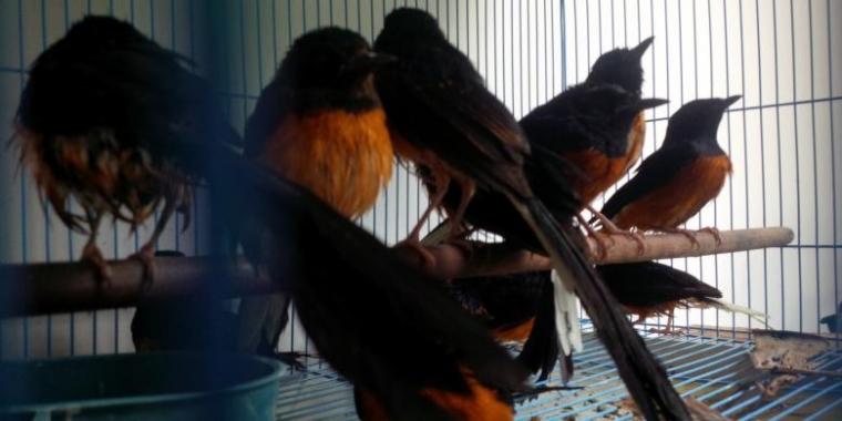 """Ironis, 5 Burung yang Dulu Dilindungi Kini """"Dikeluarkan"""""""