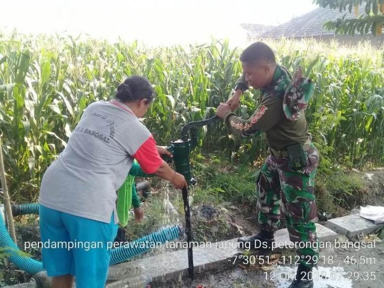 Antisipasi Gagal Panen Babinsa Koramil Bangsal Bantu Petani Airi Tanaman Jagung