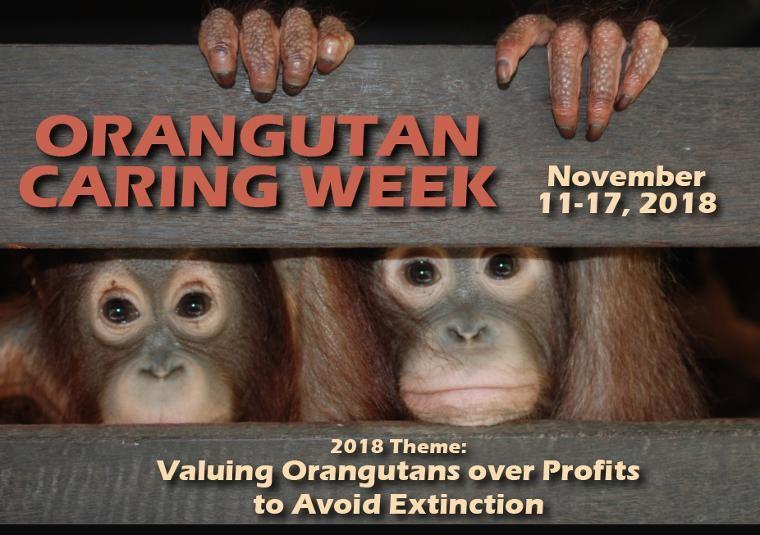 Pekan Peduli Orangutan 2018, Memaknai Nilai Penting Orangutan untuk Menghindari Kepunahan