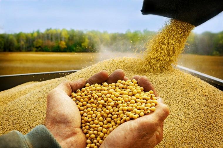 strategi perdagangan biji-bijian