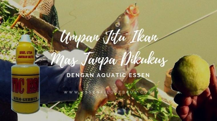 Rekomendasi Umpan Jitu Ikan Mas Tanpa Dikukus Paling Ampuh Kompasiana Com