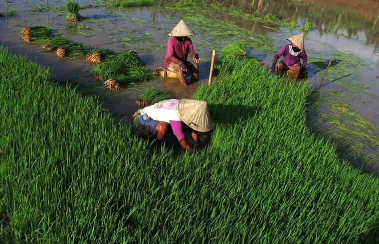 Akhir Tahun, Momentum Evaluasi Pertanian