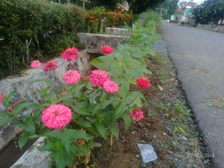 Bolehkah Kita Menanam Bunga Di Tepi Jalan Kompasiana Com
