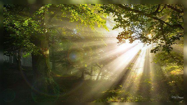 Cahaya Diriku