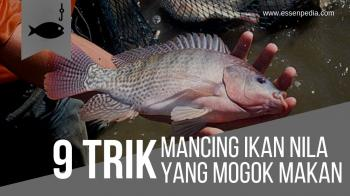Download 6600 Gambar Mancing Ikan Air Tawar HD Gratis