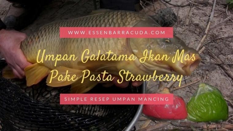 Resep Umpan Galatama Ikan Mas Pake Pasta Strawberry Mantap Kompasiana Com