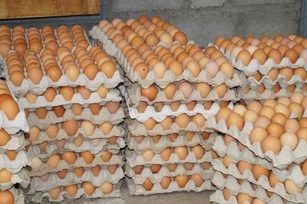 Bagaimana Cara Prabowo Menurunkan Harga Telur Sekaligus Mensejahterakan Petani Jagung?
