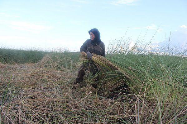 Purun, Kisah Perempuan dan Padang Rumput di Lebak Basah Itu