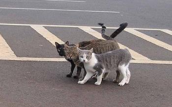 Berebut Menolong Kucing di Jalan, Adakah Mitos? oleh Imam Subkhan