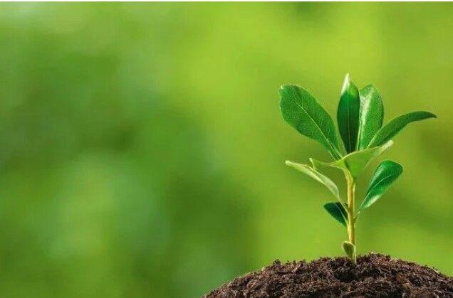 Manfaat Kompos Kombinasi Benam Untuk Sumbar Hara Kesuburan dan Menambah Nutrisi Tanaman