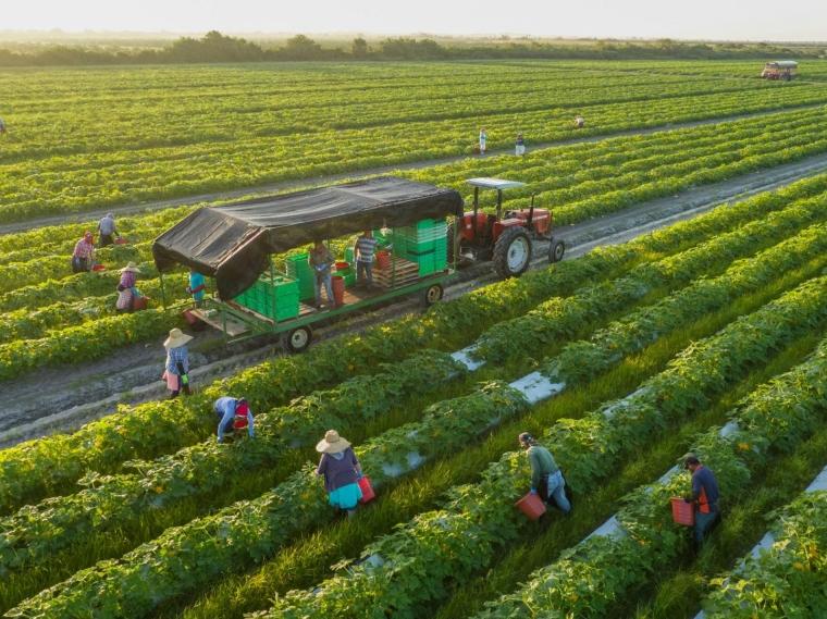 Pertanian Berkelanjutan Penjaga Kualitas Tanah