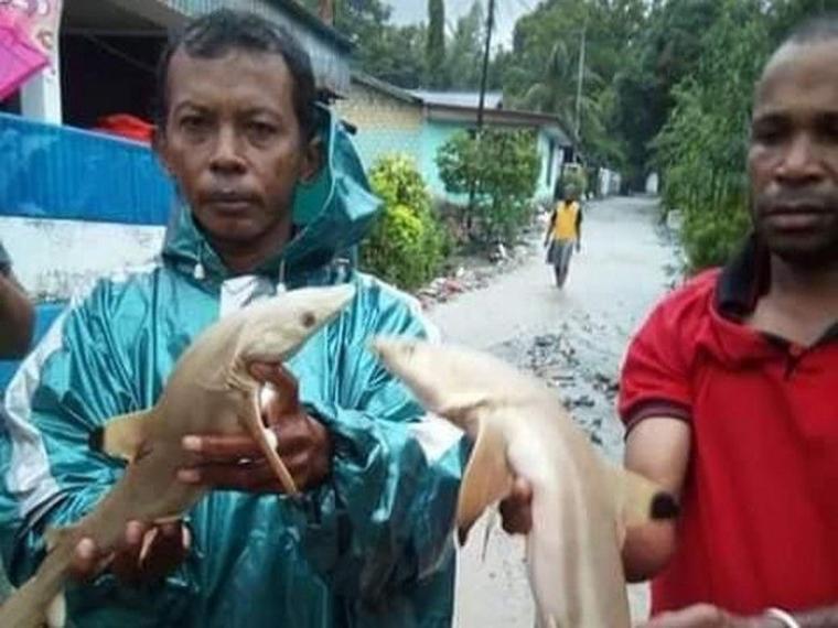 Penemuan Ikan Hiu Pada Banjir Sentani Ungkap Sedikit Sejarah