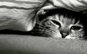 Bangunkan, Muntazhirrun!