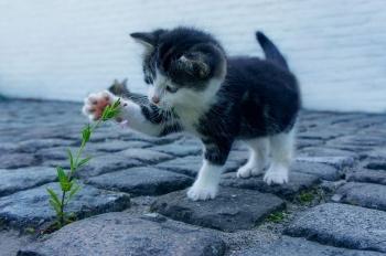 Download 93+  Gambar Kucing Bingung Paling Bagus HD