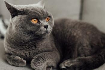 Unduh 94+  Gambar Kucing Anggora Mix Dome Terbaik