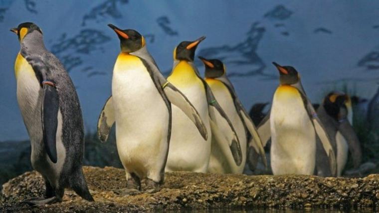 Prabowo Menyerukan Sejumlah Lembaga Survei agar Membohongi Penguin di  Antartika