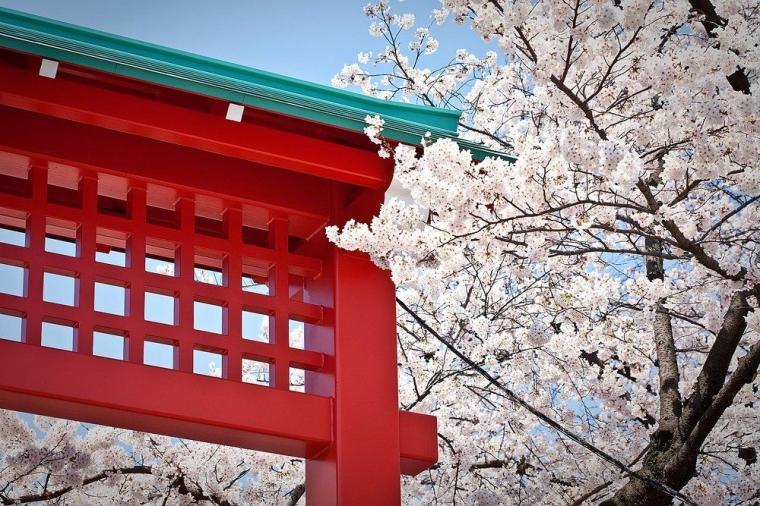 [Berburu Sakura 10] Dan Senso-ji Asakusa Bertambah Cantik dengan Bunga Sakura