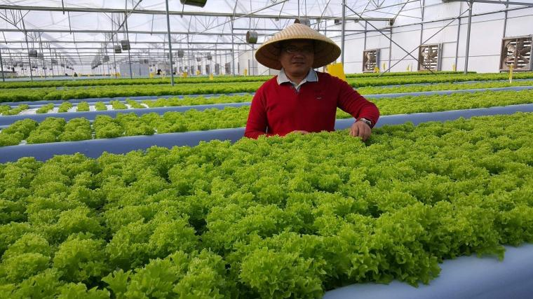 Modernisasi Pertanian Hidroponik di Era Revolusi Industri 4.0