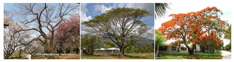 """""""Dancing Tree"""", Pohon Cantik yang Bisa Menari dan Menyanyi"""