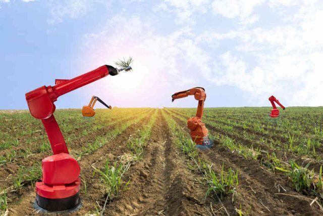 Optimalisasi Kualitas dan Kuantitas Pertanian Modern