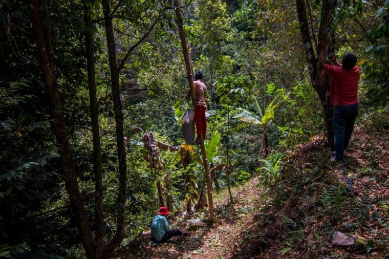 Diskursus Petani Cengkeh di Desa Pacar, Manggarai Barat