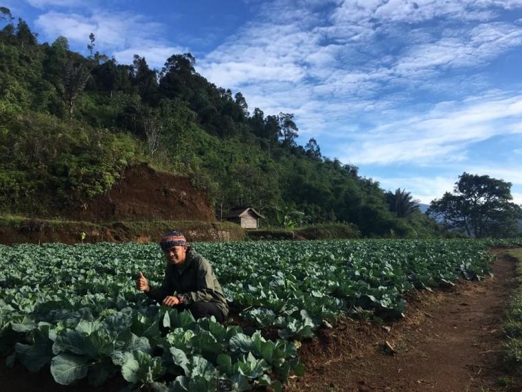Kang Apri, Petani Muda Sukses dari Kasepuhan Ciptagelar