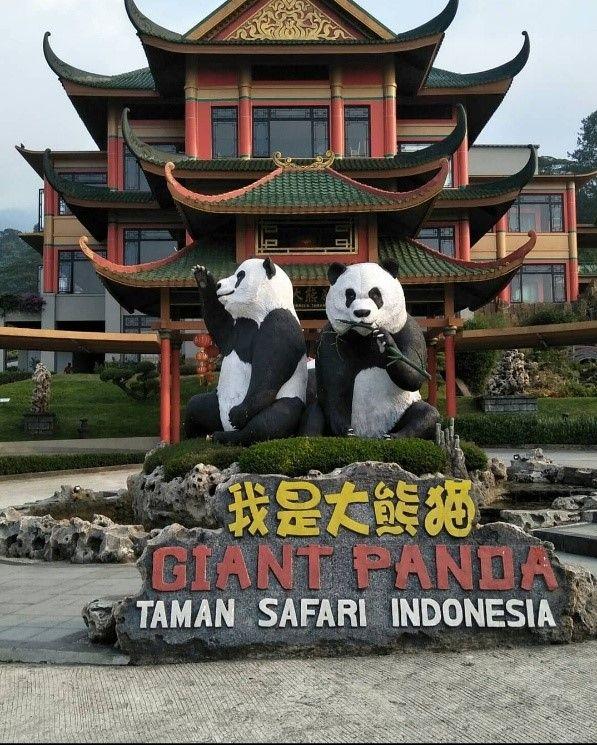 Keseruan di Taman Safari Indonesia, dengan Bermain bersama Panda Imut, Chai Tao, dan Hu Chun