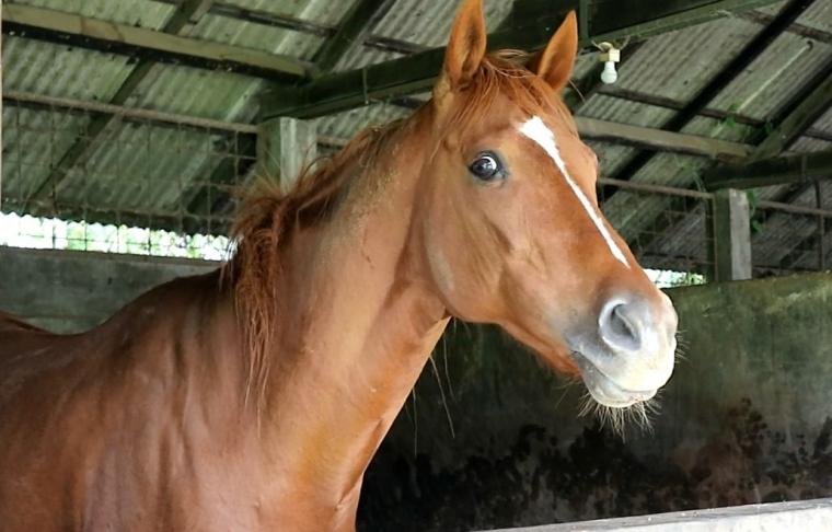 Nyawa Kuda Ada pada Kukunya