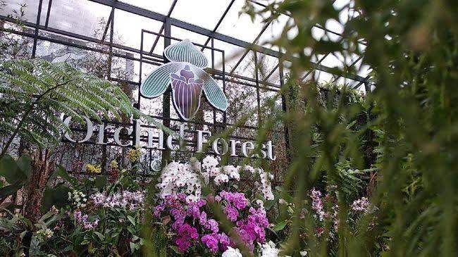 Serunya Liburan di Taman Orchid Forest Cikole