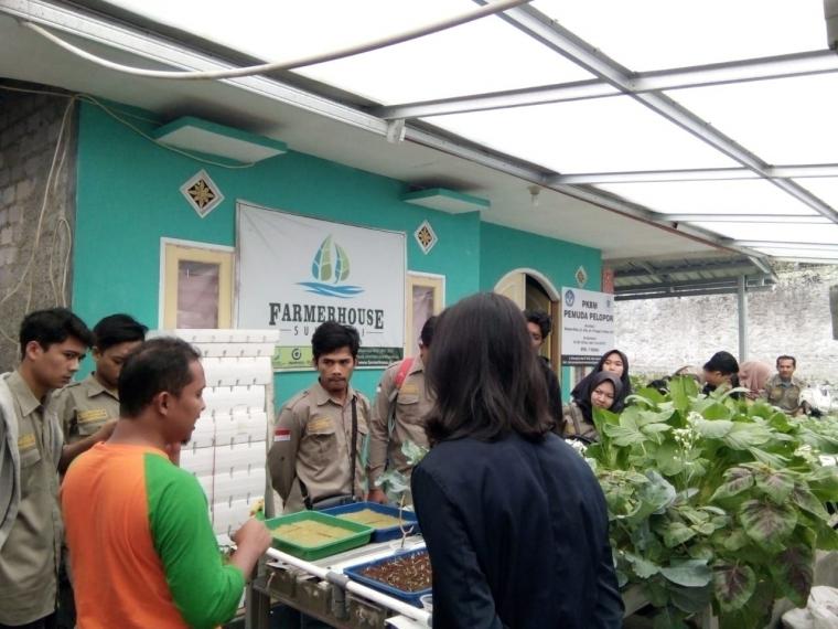 Mari Mengenal Lebih dalam Tanaman Hidroponik di Farmer House Sukabumi