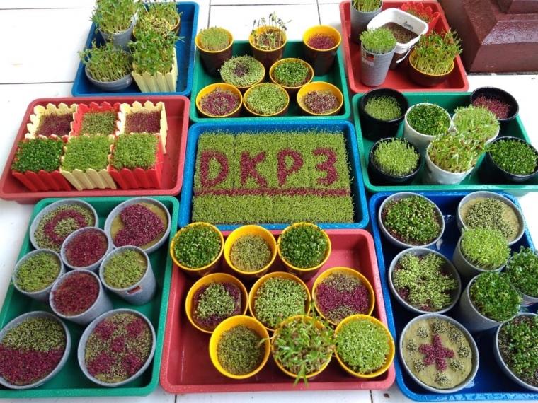 Maulana Yudha Nugraha Pelopor Micro Green di Sukabumi