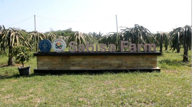 Berkenalan dengan Kebun Buah Naga Sabisa Farm