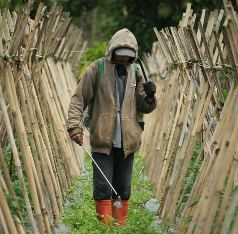 Pertanian Indonesia Maju: Capaian dan Tantangan
