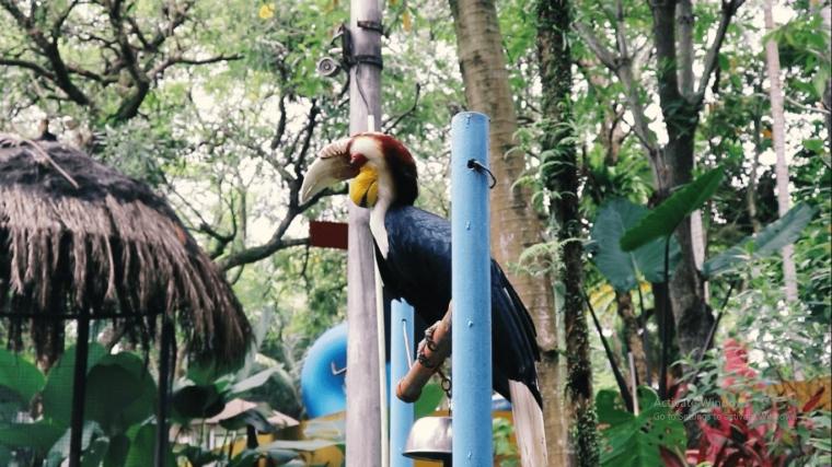 Mengenal Jenis Burung di The Jungle Waterpark Bogor