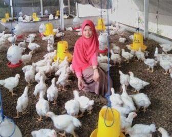 Menjahit Asa Peternak(an) Ayam Putih di Daerah Kepulauan
