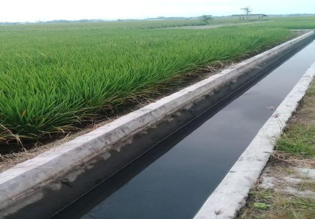 1 Juta Petani Milenial sebagai Respon Krisis Regenerasi Petani Produktif di Indonesia