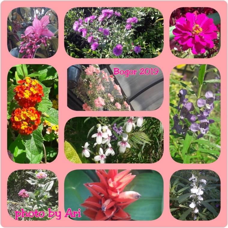 Mengejar Bunga Sampai ke Bogor