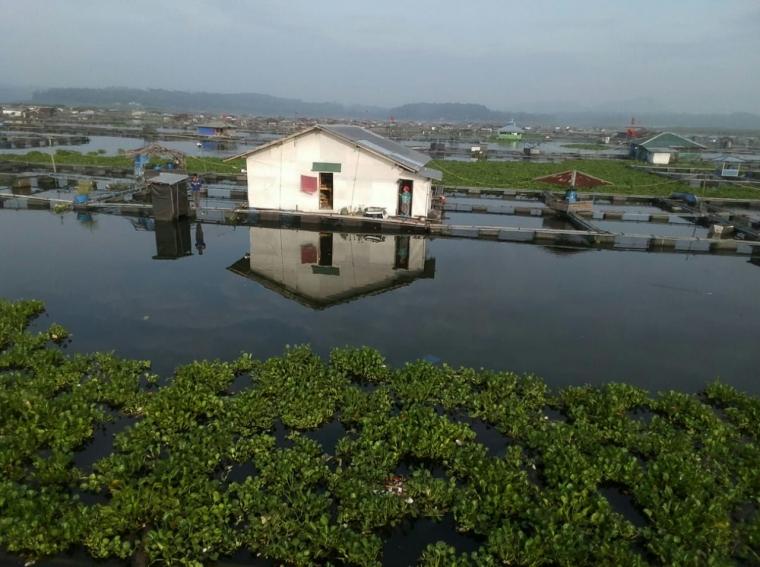 Ancaman Eceng Gondok terhadap Keberlangsungan Kolam Jaring Apung Calingcing Cianjur