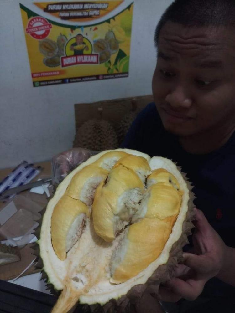 Durian 480 Juta, Ngeri!