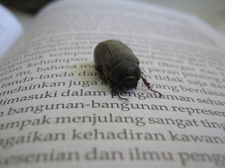 Puisi | Untuk Sebuah Nama yang Kini Menjadi Hama