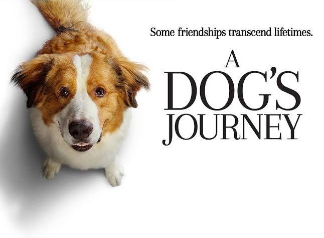 """Tentang Cinta, Kesetiaan, dan Harapan dalam """"A Dog's Journey"""""""
