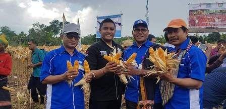 Koperasi Swastisari Sukses Memfasilitasi Petani Jagung di Sumba Barat Daya