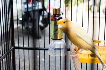 Tips dalam Hobi Burung dan Perawatannya Dengan Vitamin