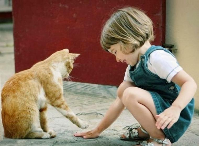 Beberapa Alasan Kucing Anda Menjadi Galak Kompasiana Com
