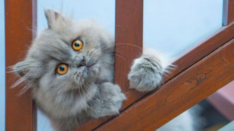 Cara Merawat Kucing Persia Dengan Mudah Halaman 1 Kompasiana Com